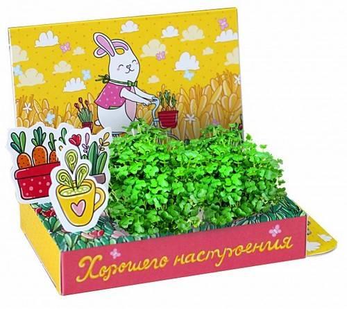 Выращивание растений подарок на 8 марта цветы на заказ лилии